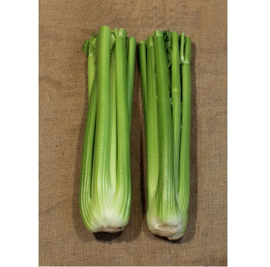 Celery Hudson TZ 3540