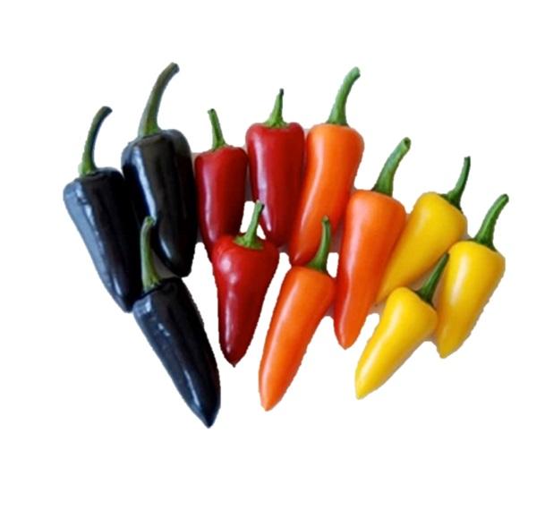 Chilli Pepper Fresno F1