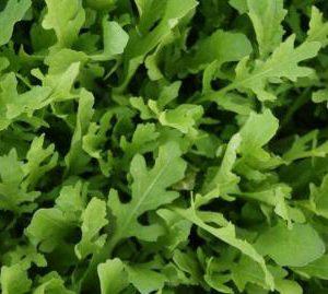 Salad Arugula Surrey